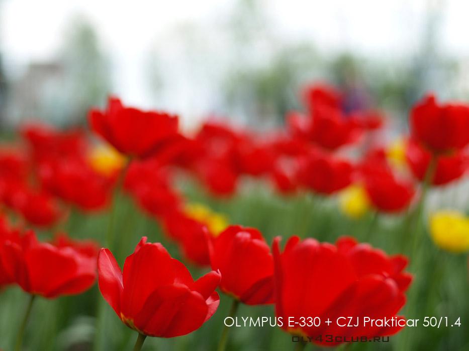 http://oly43club.ru/_images/prakticar/Prakticar_bohe_3_res.jpg